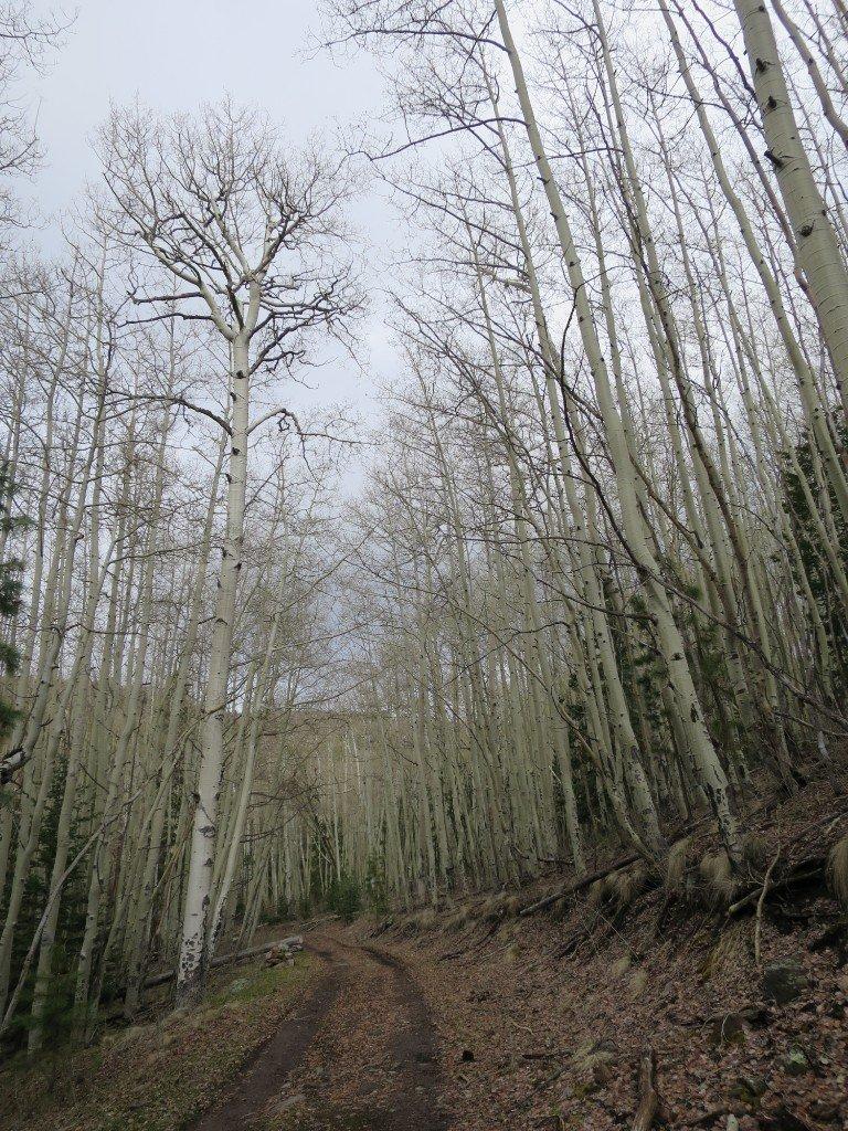 The House Of Hammer aspen grove | adventures of hammer & corky